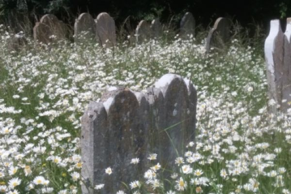 The beauty of an overgrown grave during 'lockdown'