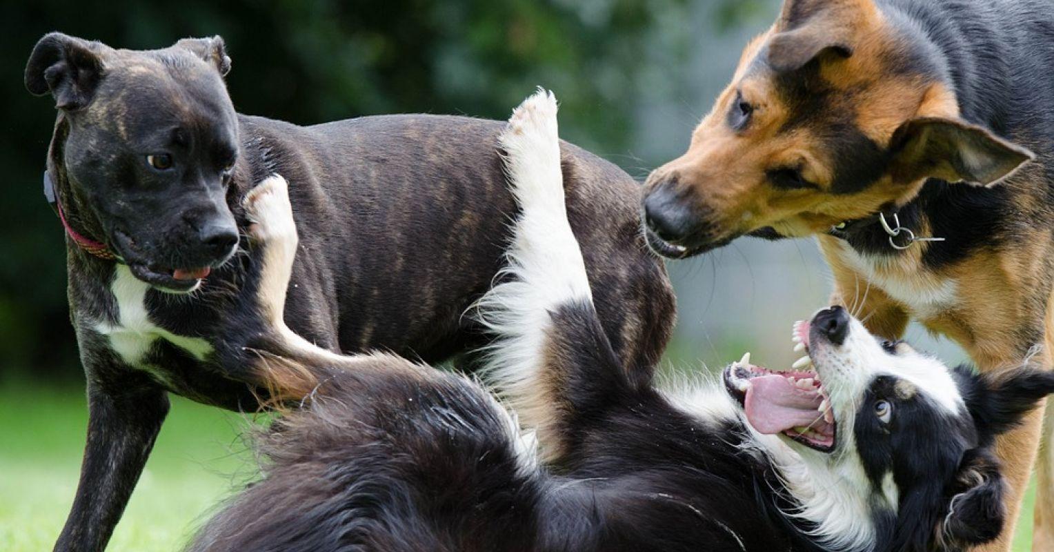 The Perils of Mislabeling Dog-Appropriate Behavior
