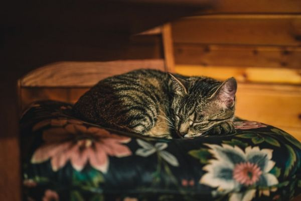 Cat sleeping on a chair with a cushion in a cabin in the woods snoozing away.