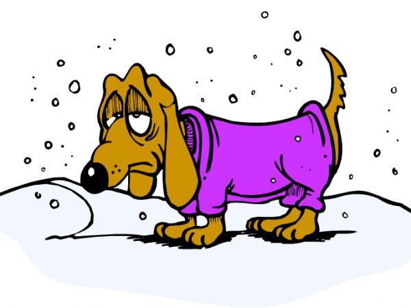 dog puppy canine sad depression winter emotion