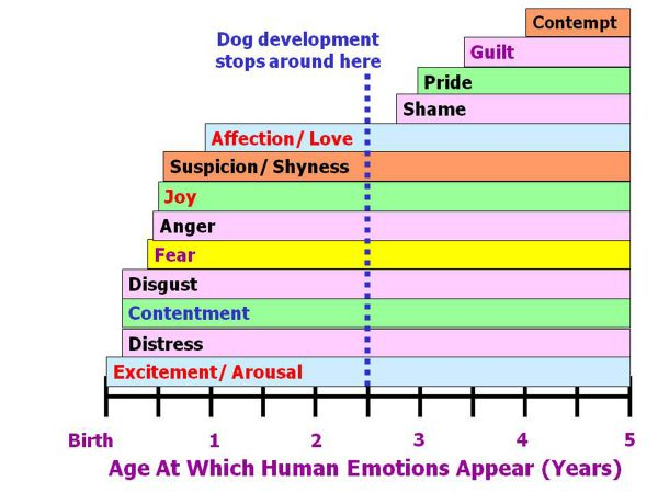 Canine age development