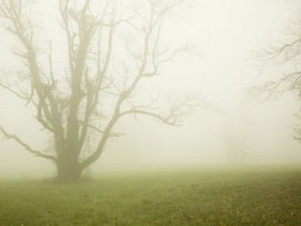 Tree in fog - wound with no name
