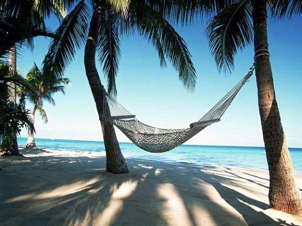 A hammock strung between palm trees.