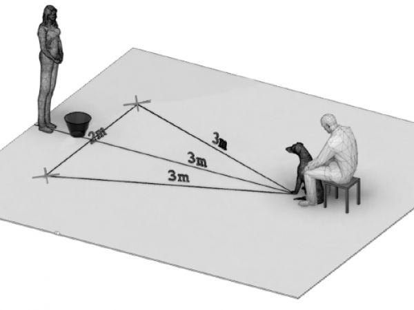 Setting of the Cognitive Bias Paradigm.