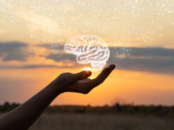 The delicate brain.