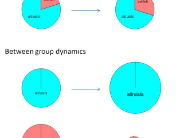 Evolutionary dynamics of altruistic and selfish groups