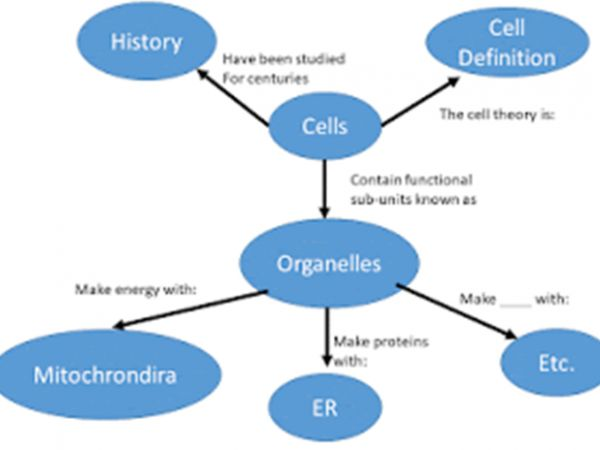 Fig. 1. Simple concept map for the relationship of cells and their organelles.