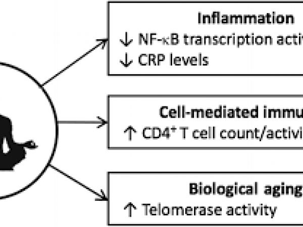 Mindfulness meditation and immune system biomarkers.