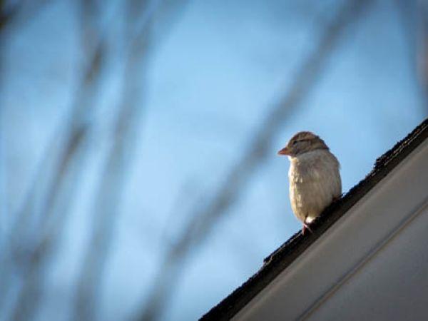 A little bird...