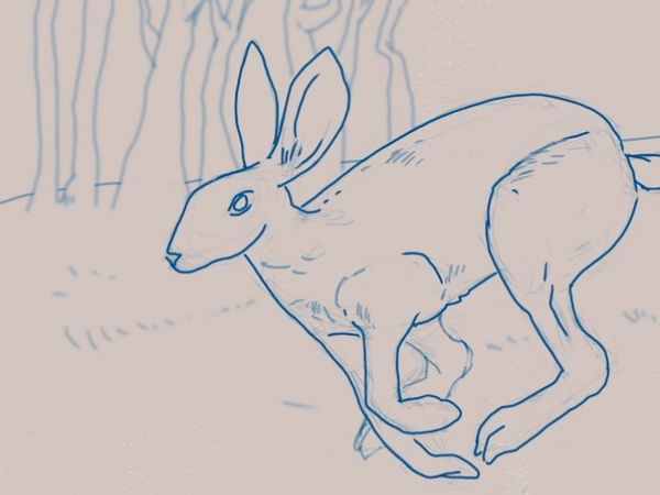 Sketch of Rabbit