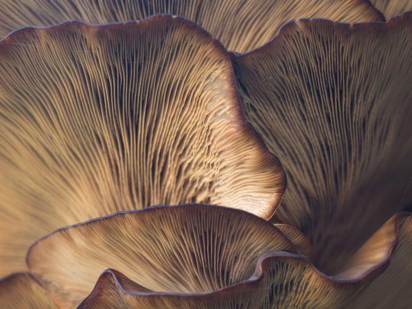 Magic Mushroom 2.0