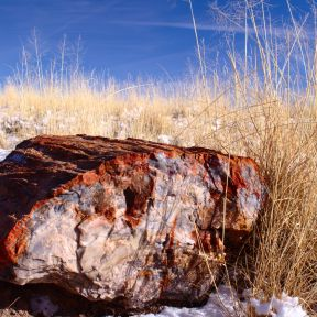 A petrified log in the Petrified Forest National Park