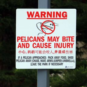 Pelican risk governance: Identify a potential hazard and offer vulnerability reduction actions.